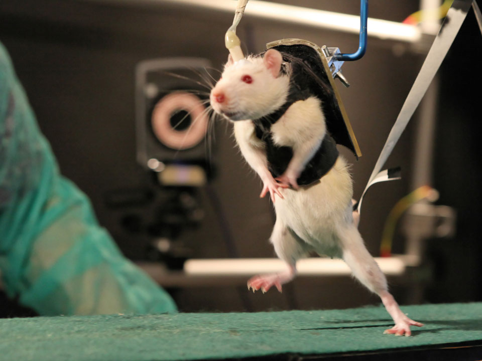 Restoring Voluntary Control of Locomotion after Paralyzing Spinal Cord Injury