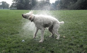 Wet Finnegan 2: Shaking