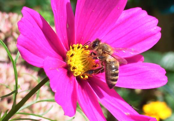 Flowers can communicate with bees through an electric field. Image: Stefan-Xp via WikiMedia Commons.