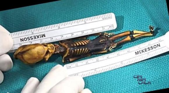 "The strange 6"" skeleton of Ata. Image: Sirius documentary"