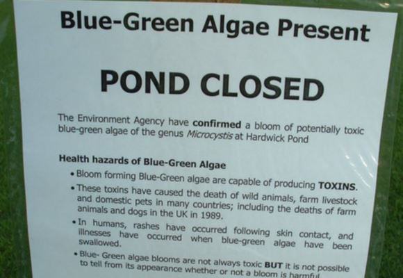 Sign informing the public that the pond on Hardwick Heath Bury St.Edmunds, Suffolk is closed. Dr. Rachael Dunlop and a team of researchers from around the world have finally discovered the mechanism by which blue-green algae is linked to Motor Neuron Disease. Image: Keith Evans / Geograph